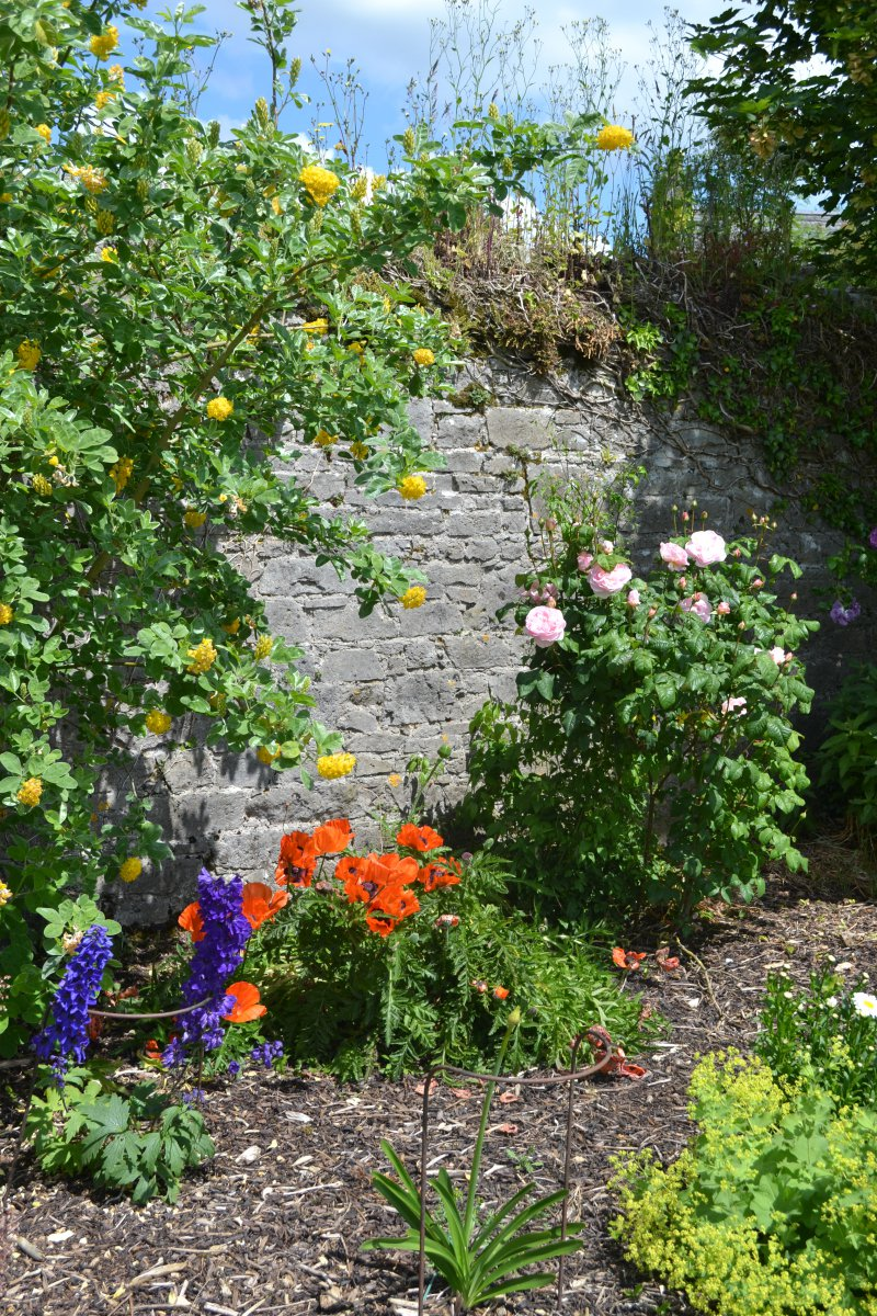 Castle Garden in Bloom
